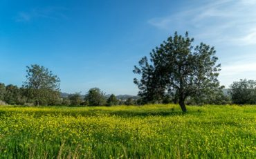 Land – San Carlos area