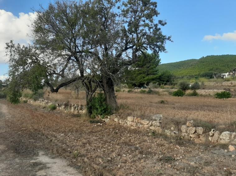Land for Sale Ibiza
